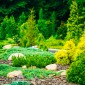 Garden Landscaping Design. Flower Bed, Green Trees And Bushes In