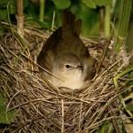 vogelundnatur-de