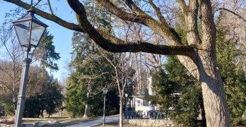 Der Grazer Stadtpark im Winter